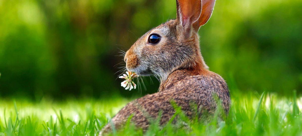 """Czy Ministerstwo Zdrowia sugeruje żebyśmy … się """"jak króliki""""? Kontrowersyjna kampania wzburzyła internautów"""