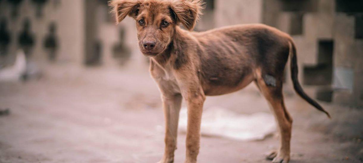 Prokuratura: to nie znęcanie się nad zwierzętami, to… niezaradność życiowa