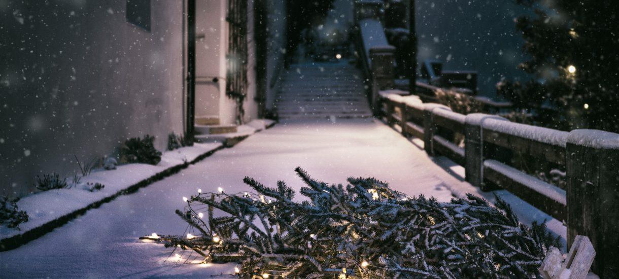 Po Świętach poszła do sklepu i zwróciła choinkę w ramach reklamacji, gdyż drzewko umarło