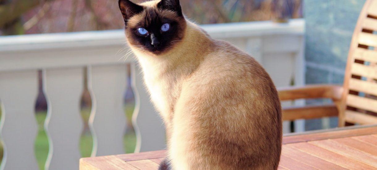 Przez pięć lat nie mogli się dogadać co do prawa własności kota. Sprawą musiał zająć się Sąd Najwyższy