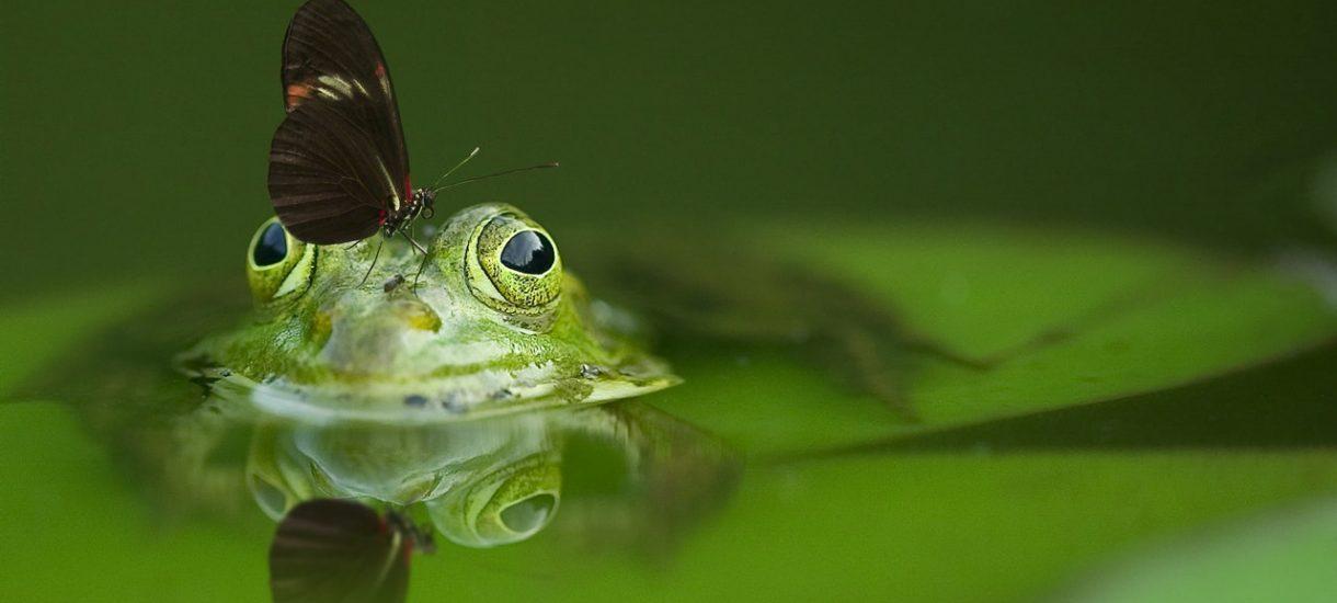 Żabka i Freshmarket placówką pocztową, czyli będą otwarte w niedziele. Bubel o zakazie handlu znów został upokorzony