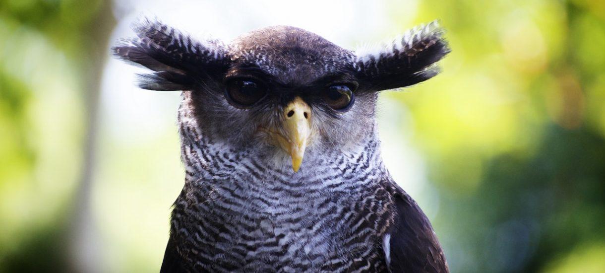 Pokazujesz sowę na ShowUp.tv albo Chaturbate? Dla fiskusa jesteś artystką