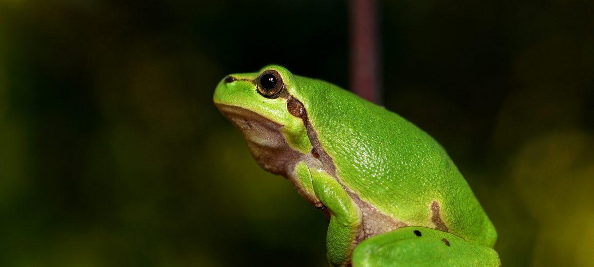 Żabka sprytnie nie obchodzi zakazu handlu w niedzielę – upokorzona Solidarność żąda kontroli