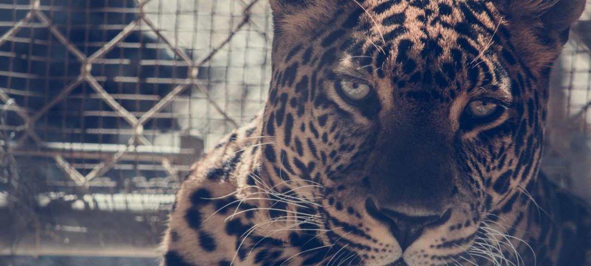 zoo w poznaniu