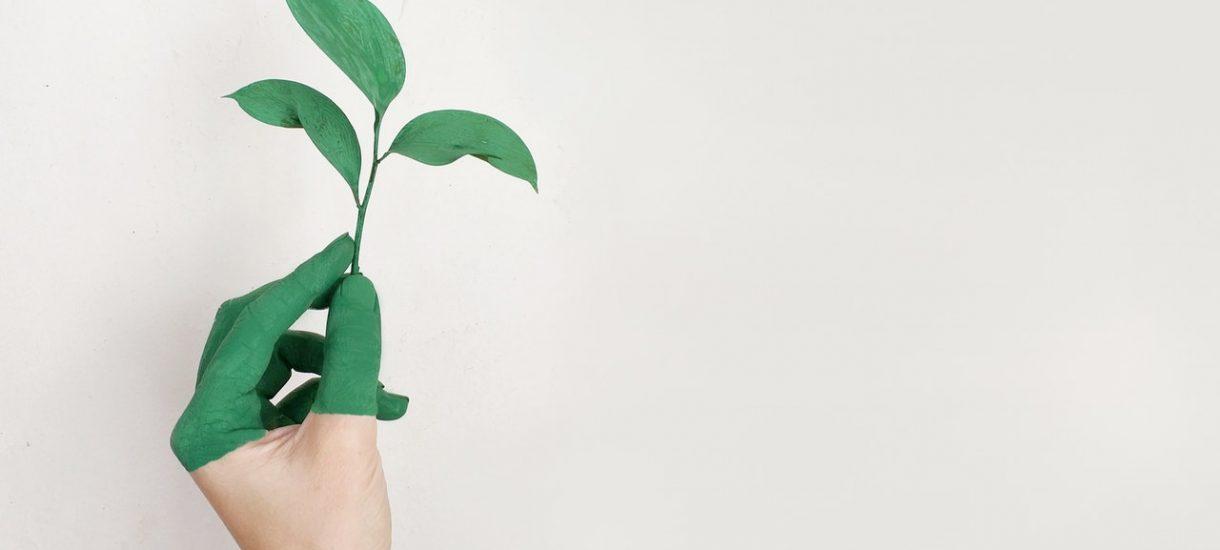 Greenpeace walczy o planetę, brudząc miasto okropną farbą. Teraz musi za to słono zapłacić