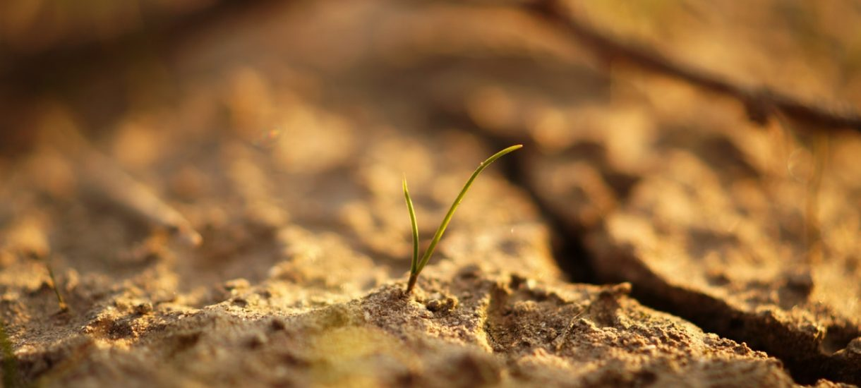 Morawiecki: My nie powiemy rolnikom, że trzeba było się ubezpieczać. A szkoda, bo powinni