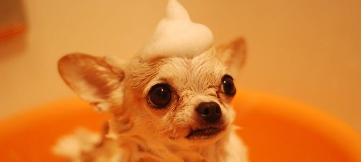 """Pies uciekł z hotelu dla psów, a obsługa poinformowała właścicielkę, że zmarł. """"Pech"""" chciał, że psa odnaleziono żywego na wolności"""