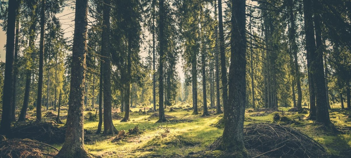 Zaskakujący pomysł Ministerstwa Środowiska. Na terenach lasów państwowych powstaną drewniane domy