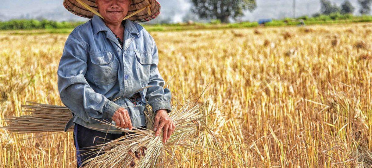 Mieszczuchy są zdziwione, że wieś nie jest spokojna i wesoła. Rolnicy chcą odbierać od nich oświadczenia, że ci znają specyfikę pracy na wsi