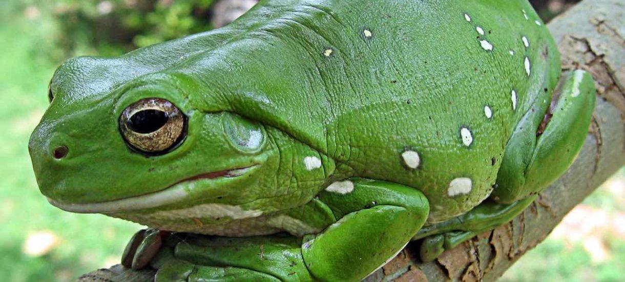 Żabka jako placówka pocztowa tylko do końca roku. Właśnie wtedy zacznie obowiązywać nowelizacja ustawy o zakazie handlu w niedzielę