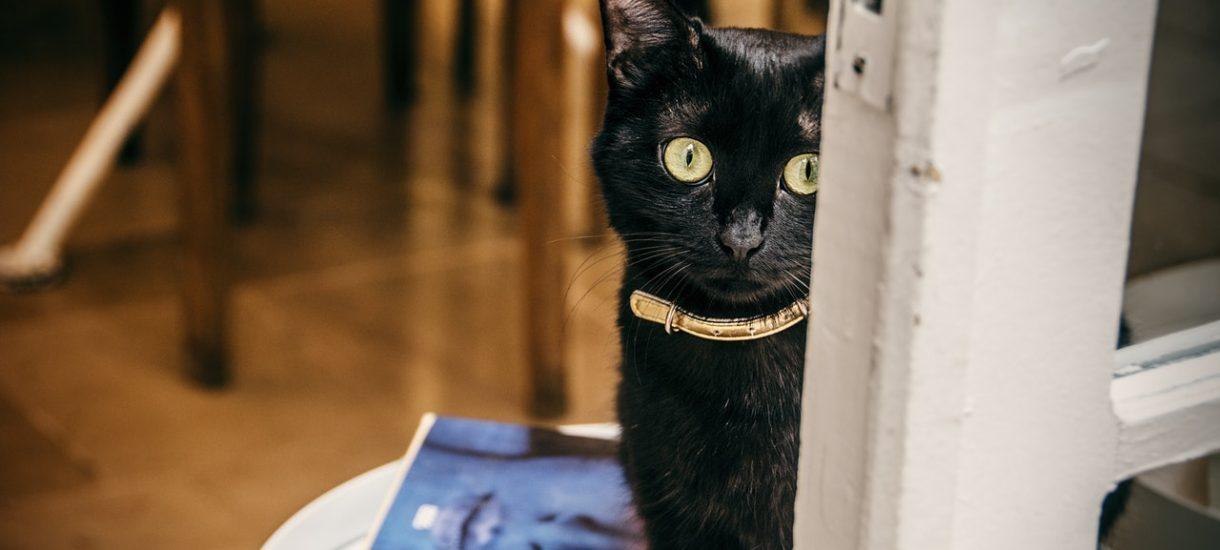 Nowa Zelandia uważa koty za morderców zagrażających środowisku. Chce zakazać ich posiadania i masowo je sterylizować