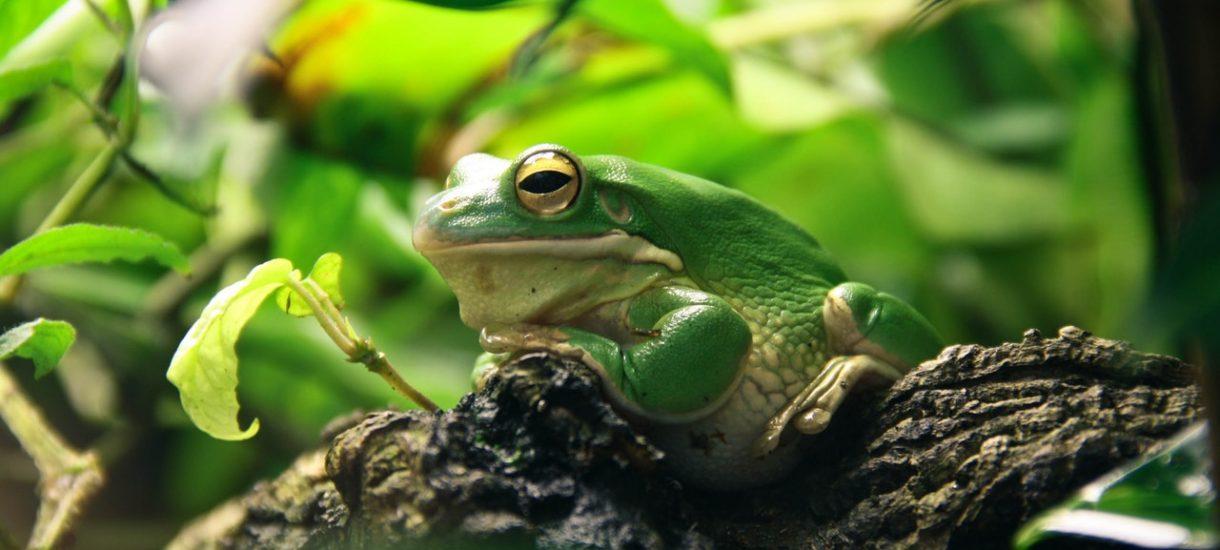 Żabka oraz Freshmarket wygrały w sądzie i nie zostaną ukarane za handel w niedzielę (pomimo zakazu)