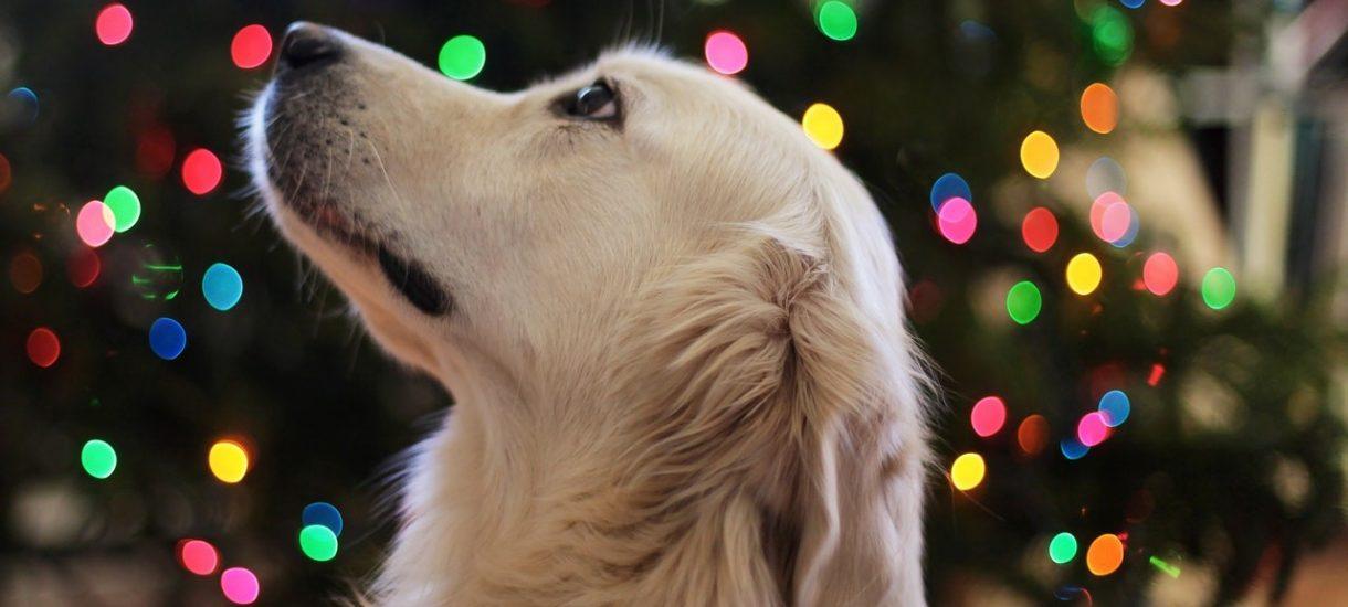 Bezdomne psy w IKEI znalazły chwilowo drugi dom. I nieważne, czy to był zabieg marketingowy, czy też nie