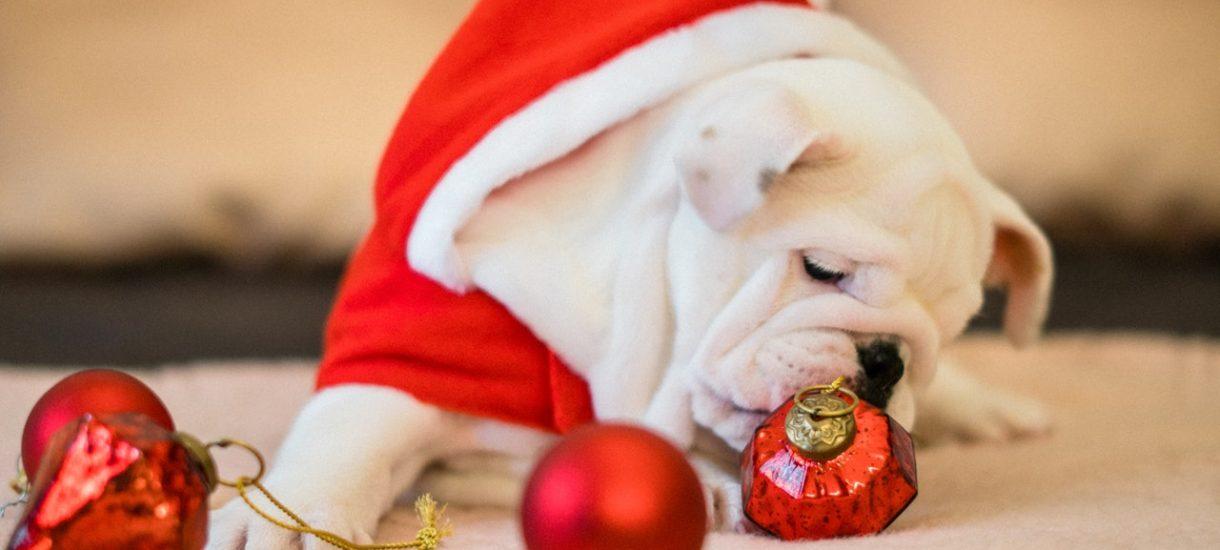 Dziwne lub bezprawne tradycje świąteczne, które kiedyś kultywowano w Polsce