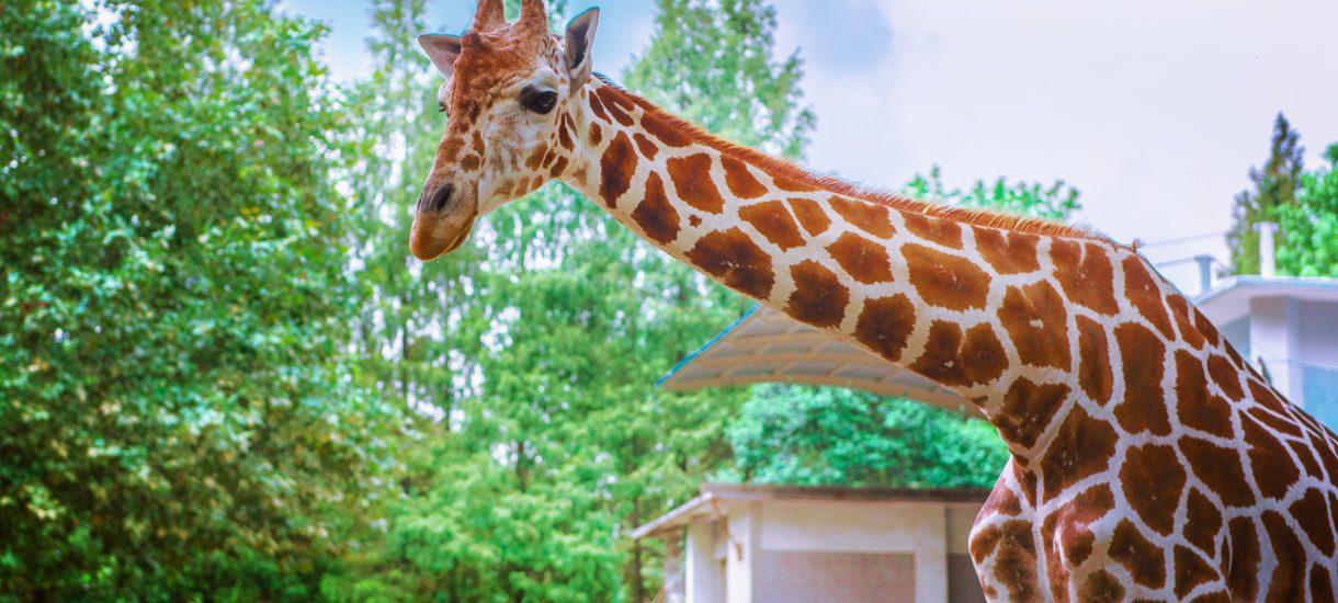 Podwyżki w zoo i innych atrakcjach: bilety drożeją przez 500 Plus? Ale nie każdy ma dzieci