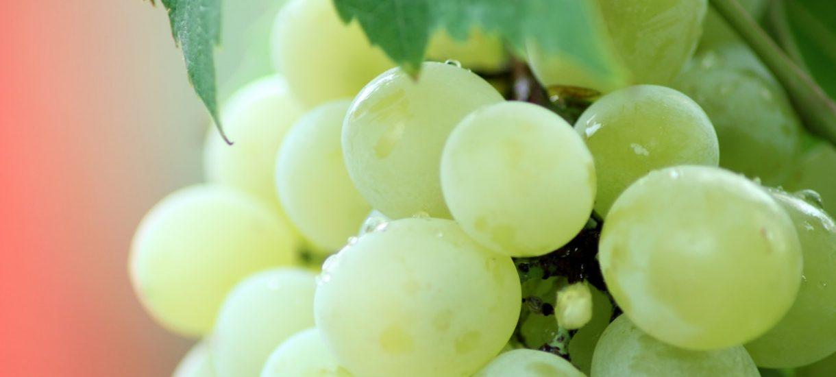 TTV namawia, żeby odcinać gałęzie od winogron i nóżki od pieczarek w sklepie. Będą tańsze
