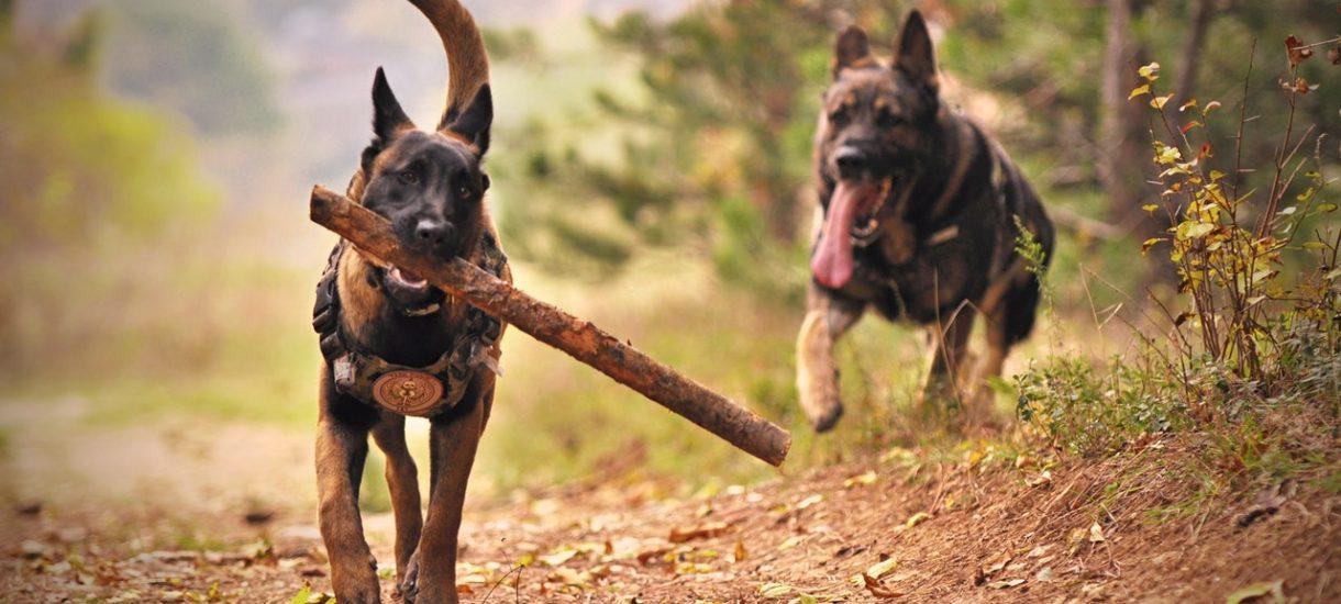 Scheuring-Wielgus znana z walki o prawa zwierząt oddała psy do schroniska. Ale tutaj kabaret się dopiero zaczyna…