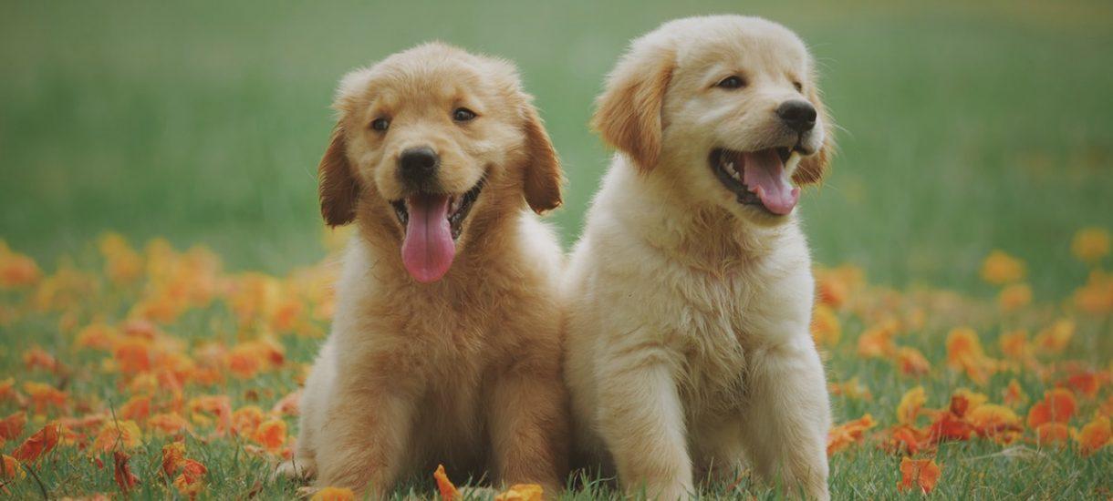 Pies na widok reklamy Pedigree dostał depresji. To nie żart, to skarga do Komisji Etyki Reklamy