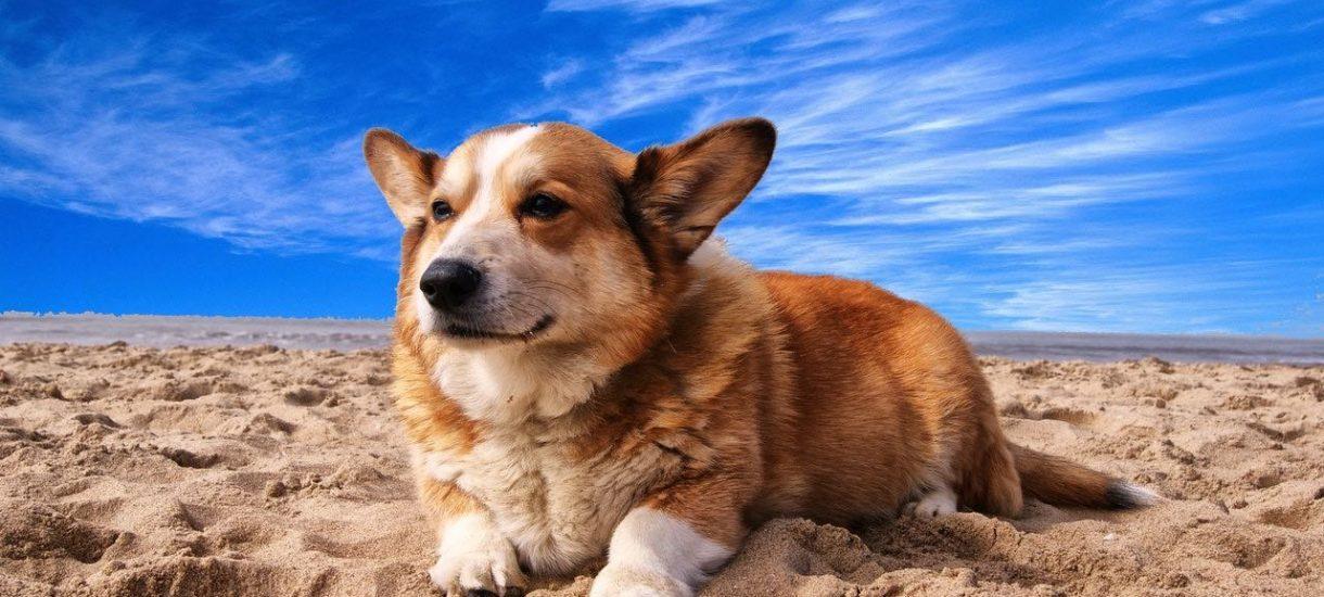 Czy zakaz wprowadzania psów do restauracji jest zgodny z prawem? Co zrobić, jeżeli właściciel nie podziela miłości do zwierząt?