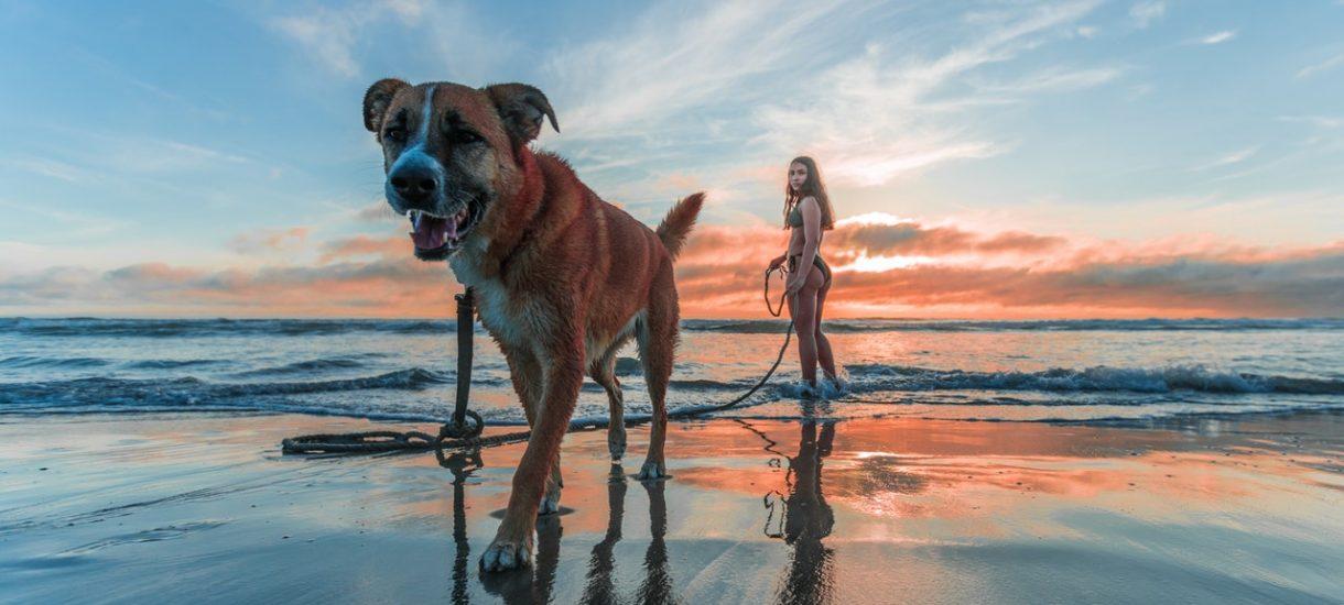 10 tys. euro kary za znęcanie się nad psem. Sąd uznał, że tak należy zakwalifikować unikanie wizyt u weterynarza, jeśli pies choruje na nowotwór