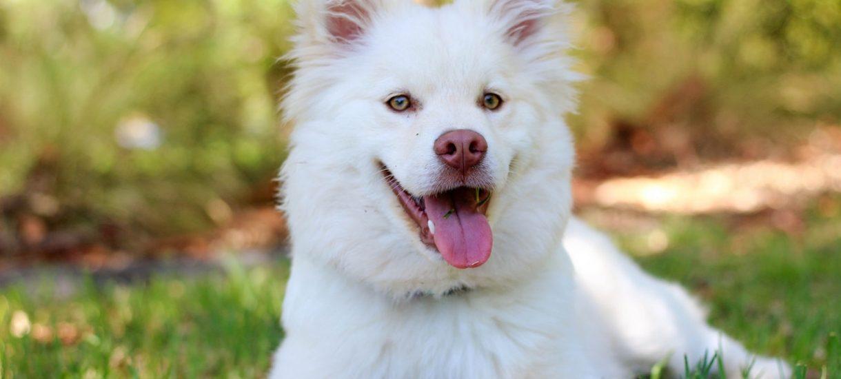 Pracownik Bodzio potrącił psa i wrzucił nagranie do sieci. Stracił pracę
