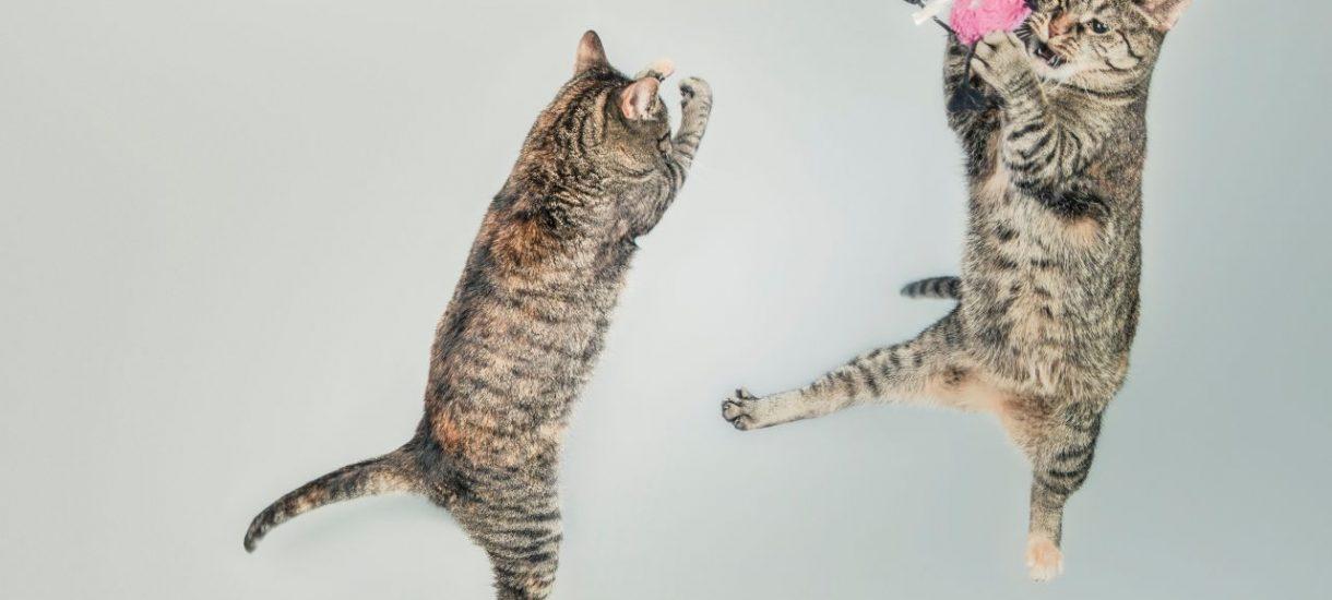Ile zwierząt można trzymać w mieszkaniu, zanim sąsiedzi pozwą właściciela? Uwaga, limit nie musi wynosić dwadzieścia