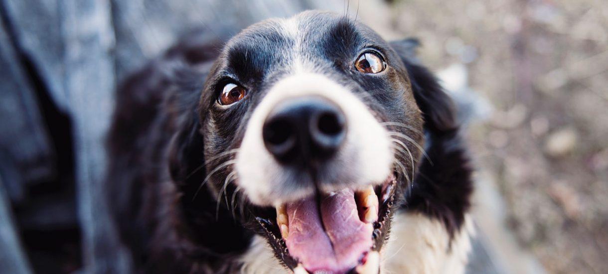 Media Expert pozwala klientom wchodzić z psami do sklepu. To reakcja na upały