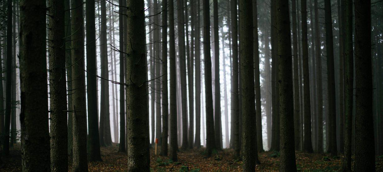 Szefowa, która wywiozła Ukraińca do lasu, nie powinna przypadkiem być oskarżona o zabójstwo?