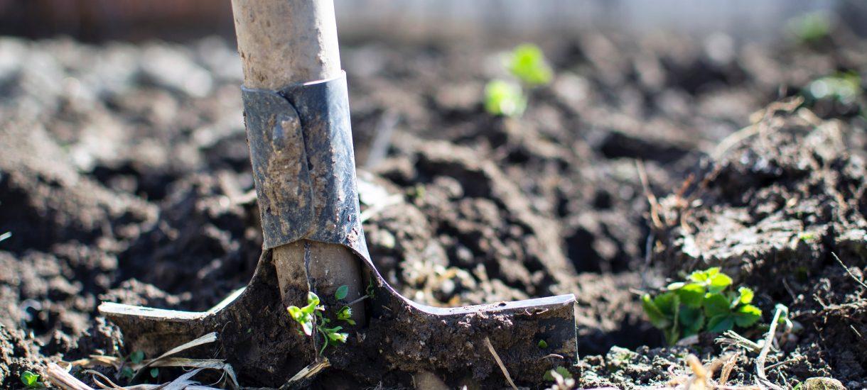Zamiast wakacji na Rodos, warto rozważyć zakup działki ROD – Rodzinnego Ogródka Działkowego