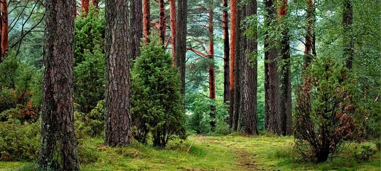 Jak sprzedać las? Krótki poradnik na temat sprzedaży nieruchomości leśnych