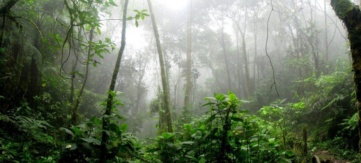 Płoną lasy Amazonii, a jednak osób, które płaczą i modlą się, jest mniej niż gdy płonęła katedra Notre Dame