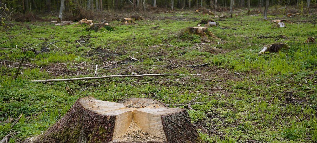 Czy jeśli chcemy wyciąć drzewo na własnej działce, to musimy prosić urzędników o zgodę, czy może teraz wycinać można już wszystko?