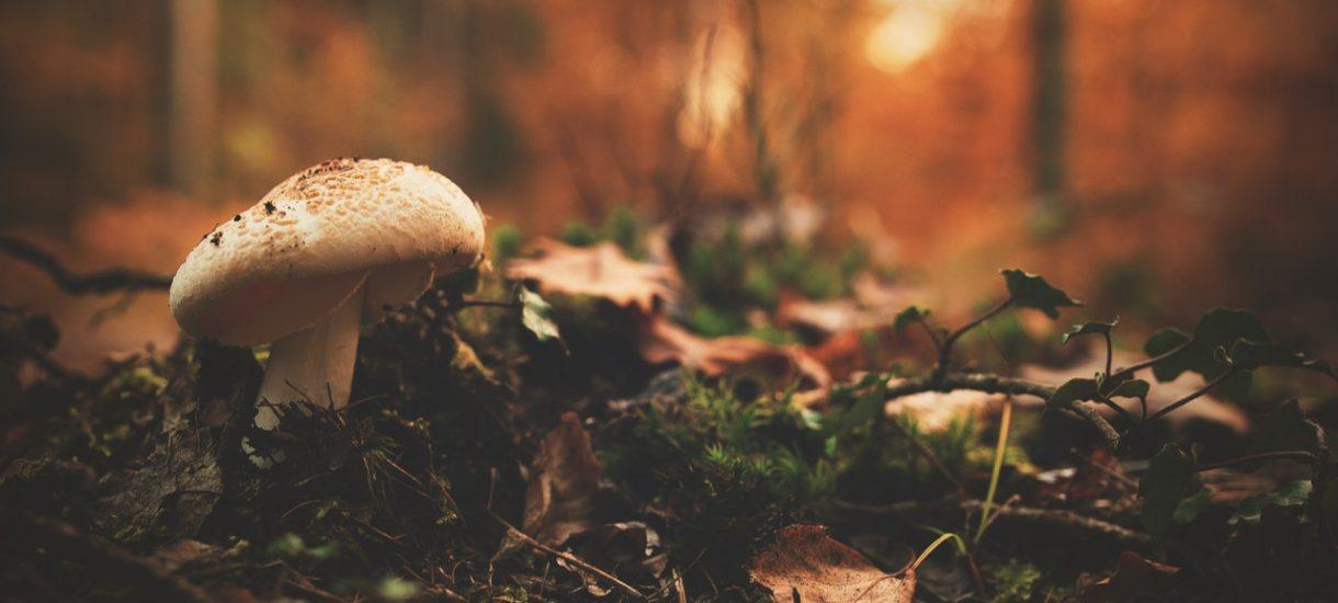 Kara za zbieranie grzybów. Czy zbieranie grzybów w Polsce zawsze jest legalne?