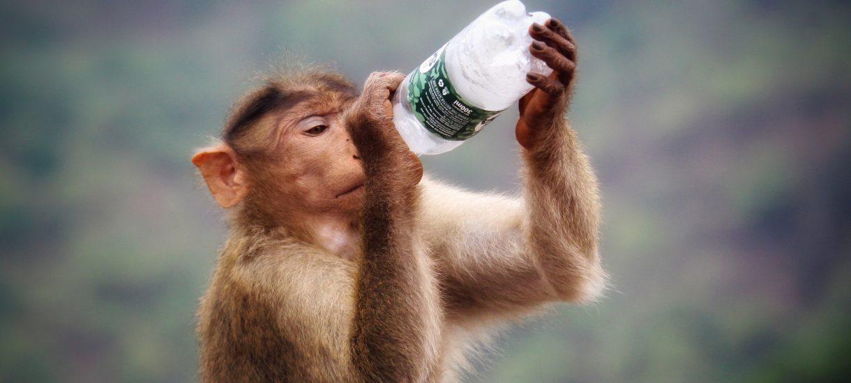 Polacy kupują codziennie 3 mln buteleczek z wódką. Samorządy się zbuntowały – idzie koniec małpek