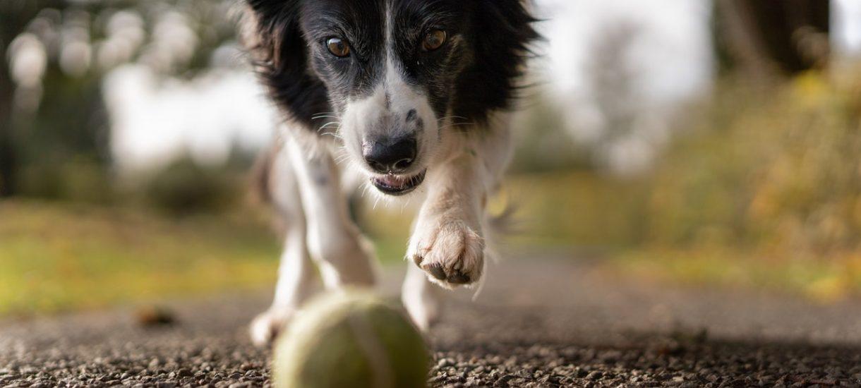 Nakaz wyprowadzania psa na smyczy jest zgodny z prawem. Nadbiegający pies może kogoś przestraszyć, potwierdził sąd