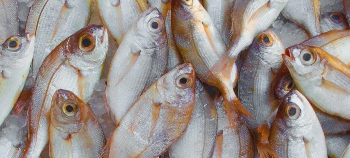 Pracownik Carrefoura znęca się nad rybami, pakując je żywe do torby bez wody? Jeśli tak było faktycznie, to jest to przestępstwo