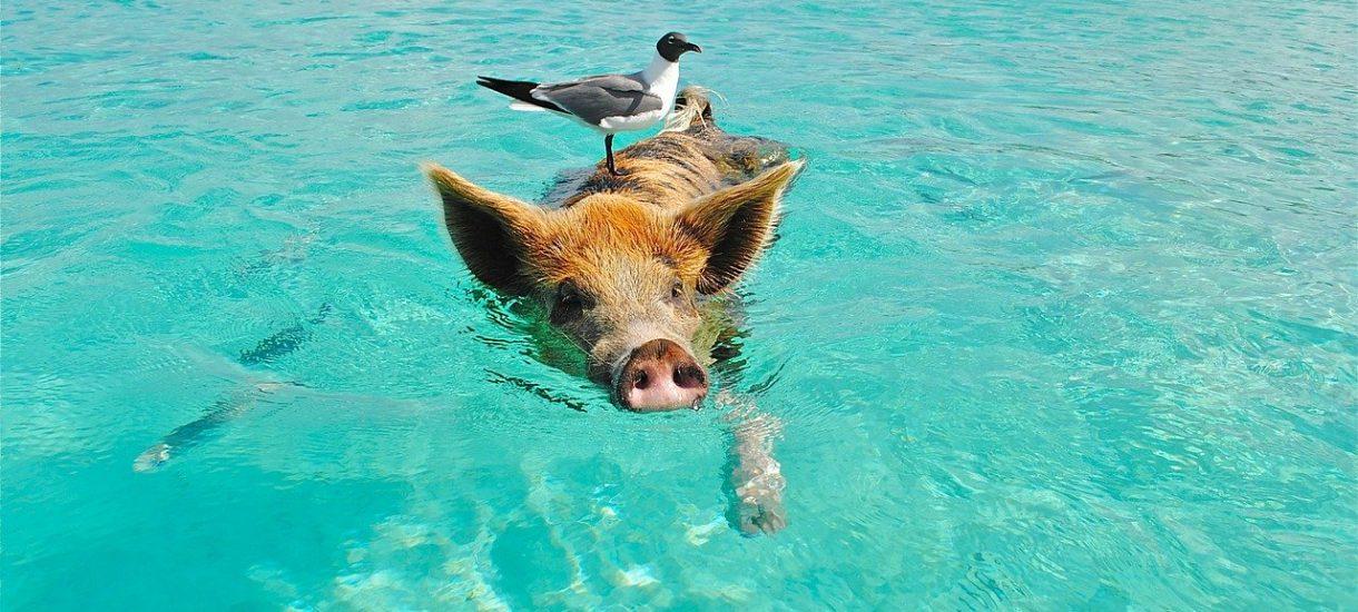 Incydent kałowy na basenie, co grozi żartownisiowi za zanieczyszczenie wody?