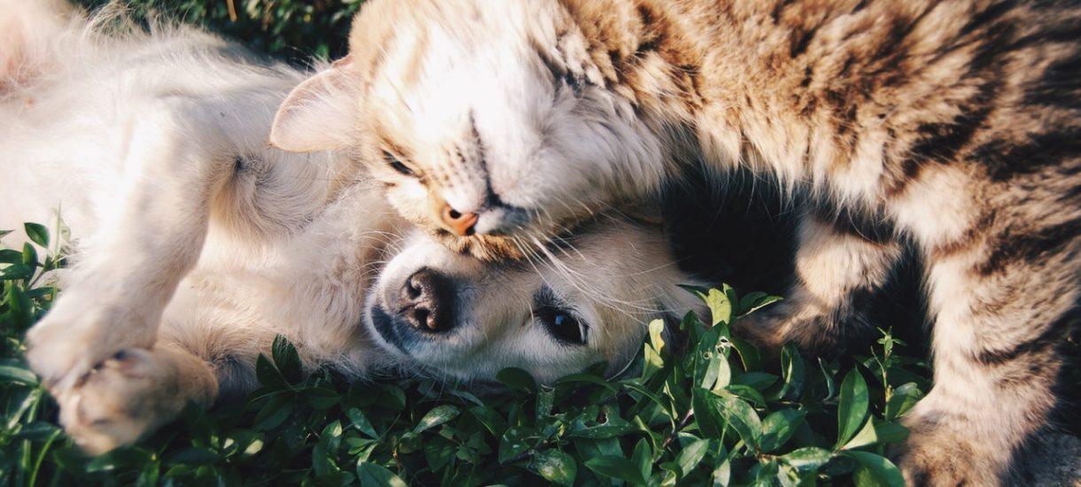 OLX zachęca do nakarmienia psów ze schronisk. Pomóc może niemal każdy