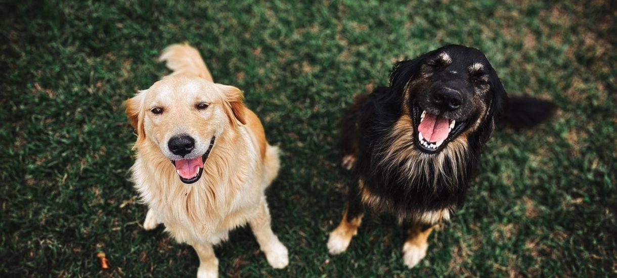 Nie, zwierzęta nie umierają na koronawirusa i nie, nikt ich nie oddaje do eutanazji. Ale ludziom to nie przeszkadza w powielaniu fejków