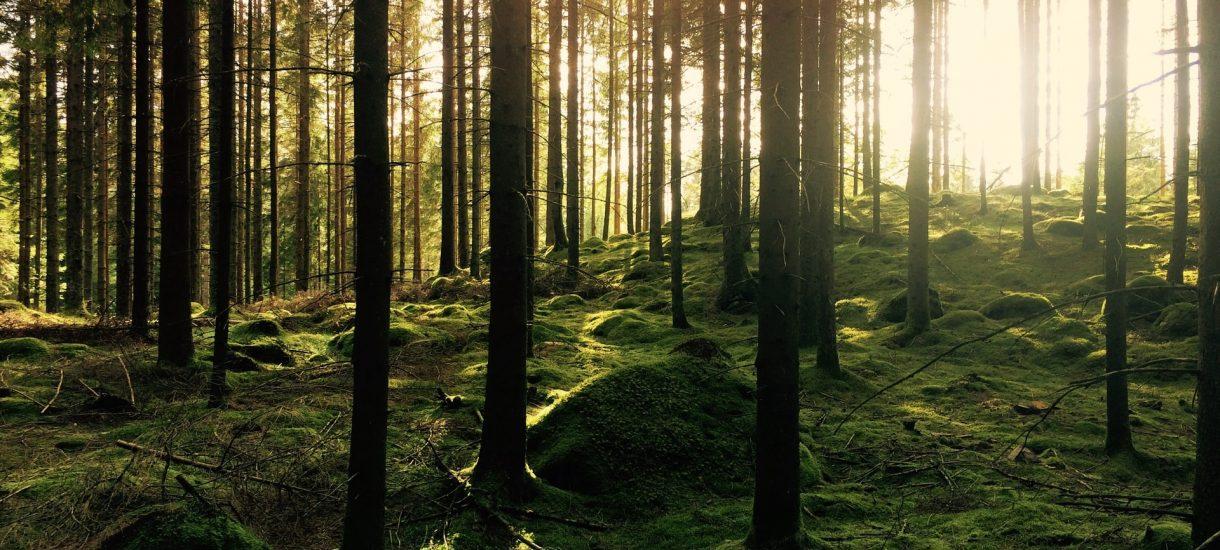 Lasy Państwowe wycięły las, żeby zbudować siedzibę, której nie będzie