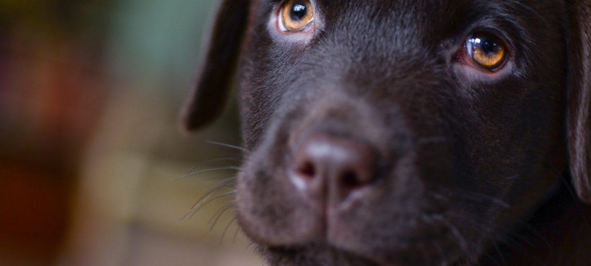 Wciąż są ludzie, którzy uważają, że zwierzęta domowe roznoszą koronawirusa – i dlatego się ich pozbywają. A kara za porzucenie psa lub kota jest surowa