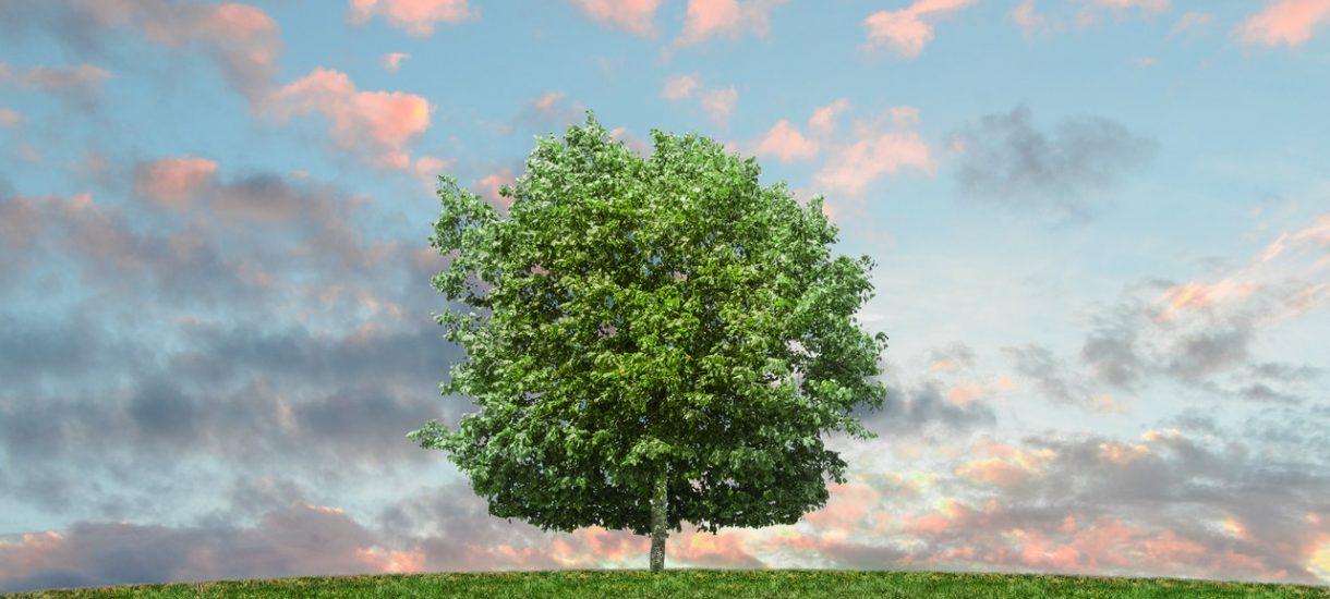 Kiedy można usunąć drzewo ze swojej nieruchomości? Okazuje się, że nie jest to takie proste