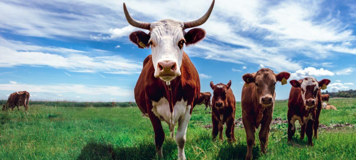 Rolników czeka wielka spowiedź. Państwo chce wiedzieć o każdej kurze i o każdej krowie