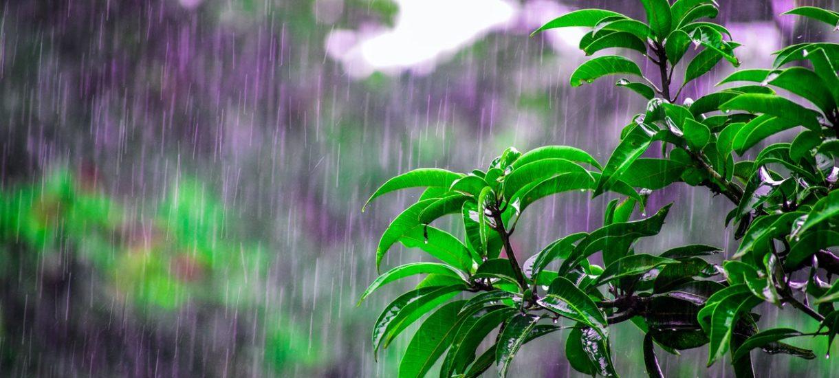 Kogo obejmie podatek od deszczu? Wody Polskie objaśniają projekt ustawy antysuszowej