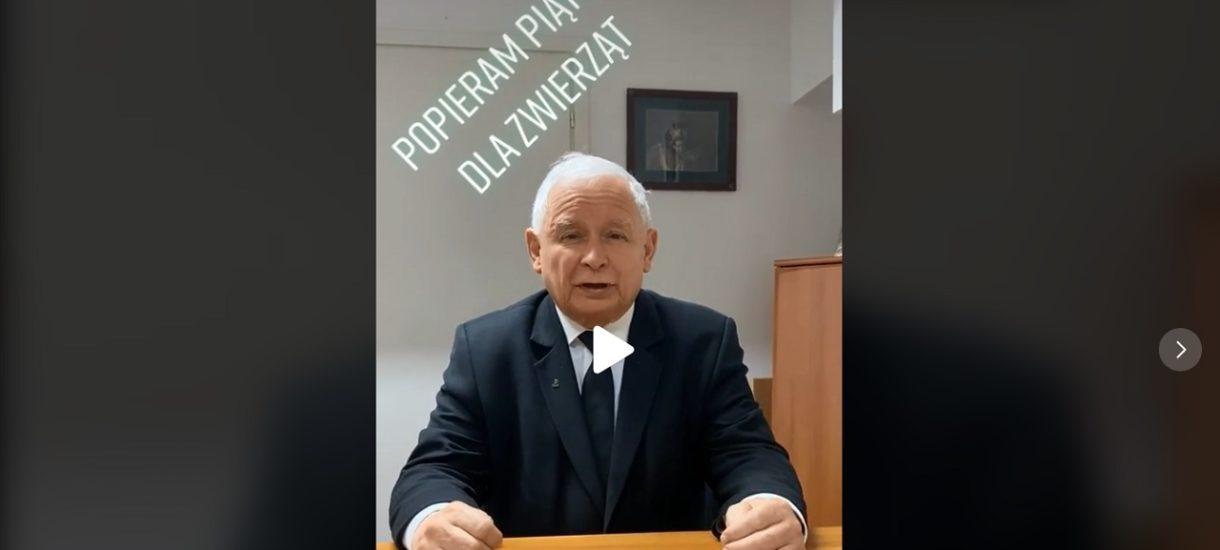 Tego się nie spodziewaliście: Jarosław Kaczyński na TikToku inicjuje akcję #StopFurChallenge