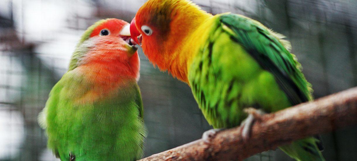 Czy całowanie osoby poniżej 15 lat jest w ogóle legalne? Prawne oblicza szkolnych miłości