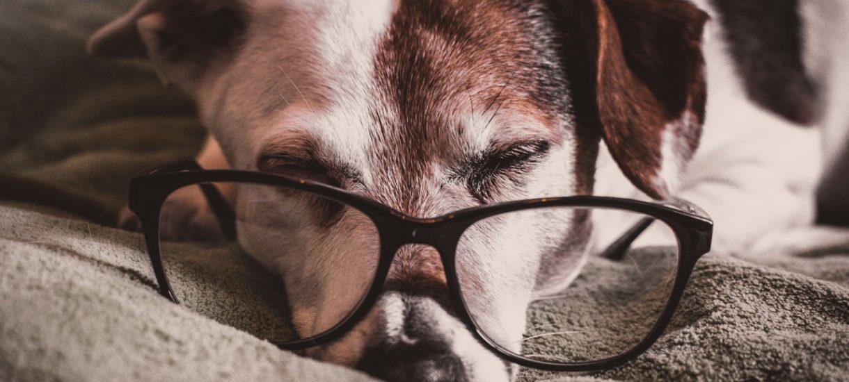 Powstała aplikacja, dzięki której pies sam wybierze sobie zabawkę w sklepie. Czy czworonóg w ogóle może coś kupić?