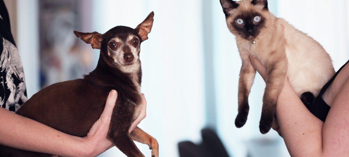 """""""Żyją jak pies z kotem""""? Czyli… w przyjaźni"""