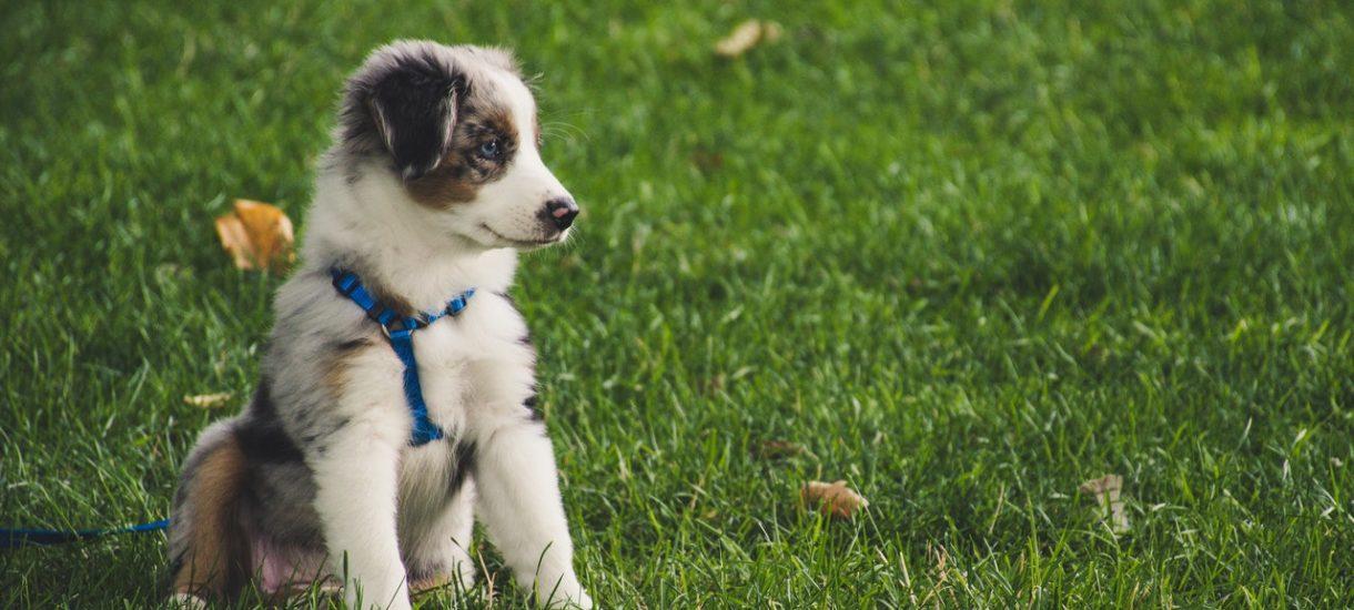 Sąd uznał, że obowiązek trzymania (także agresywnych) psów na smyczy i w kagańcu jest niezgodny m.in. z Konstytucją RP