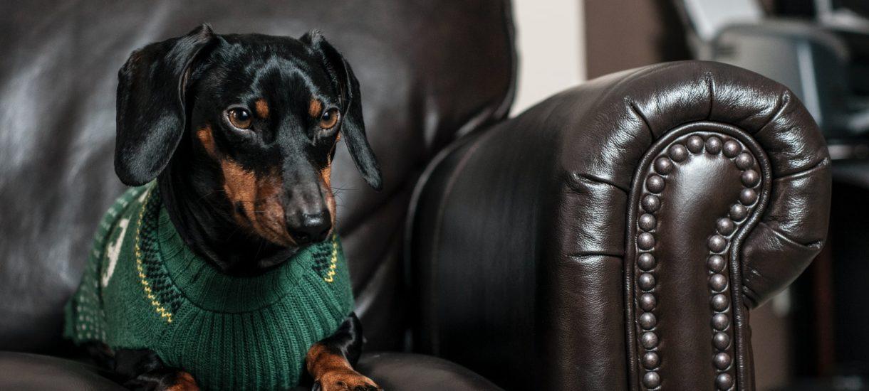 Psi lub koci pracownik ujęty w kosztach firmy? Fiskus daje zielone światło